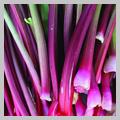 RhubarbSq.jpg