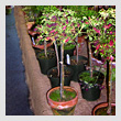 potted-plantsT.jpg