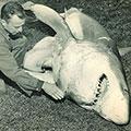 sharkth.jpg