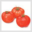 tomatoesT.jpg