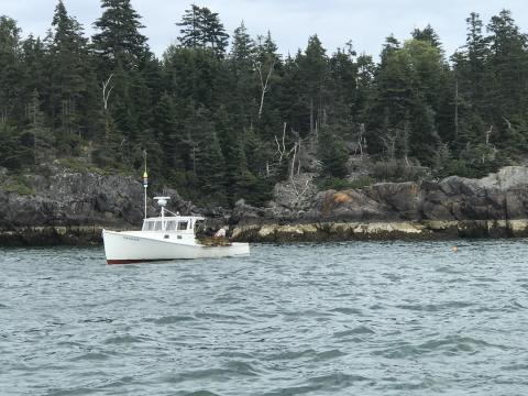 Maine's seafood harvest: once again lobster leads the way
