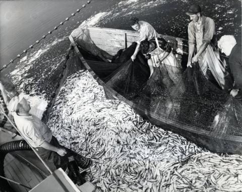 The Net Result: Our Evolving Fisheries