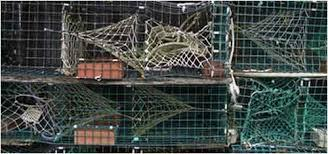 $15,000 reward offered in lobster trap cutting case