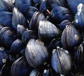 State recalls mussels, closes area to harvesting